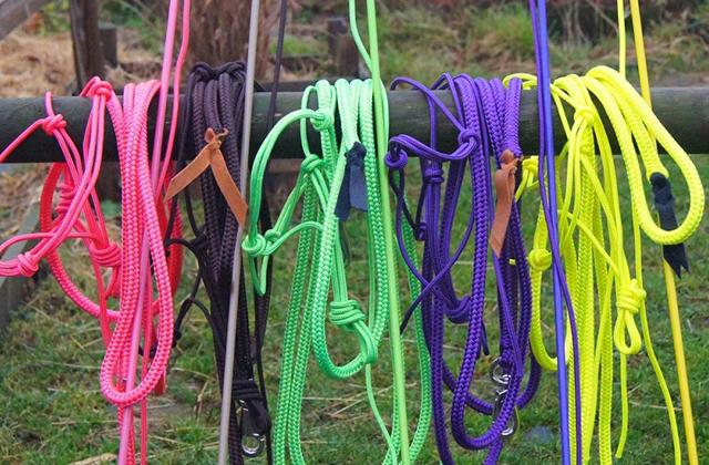 concours-ethologie-horse-ropes